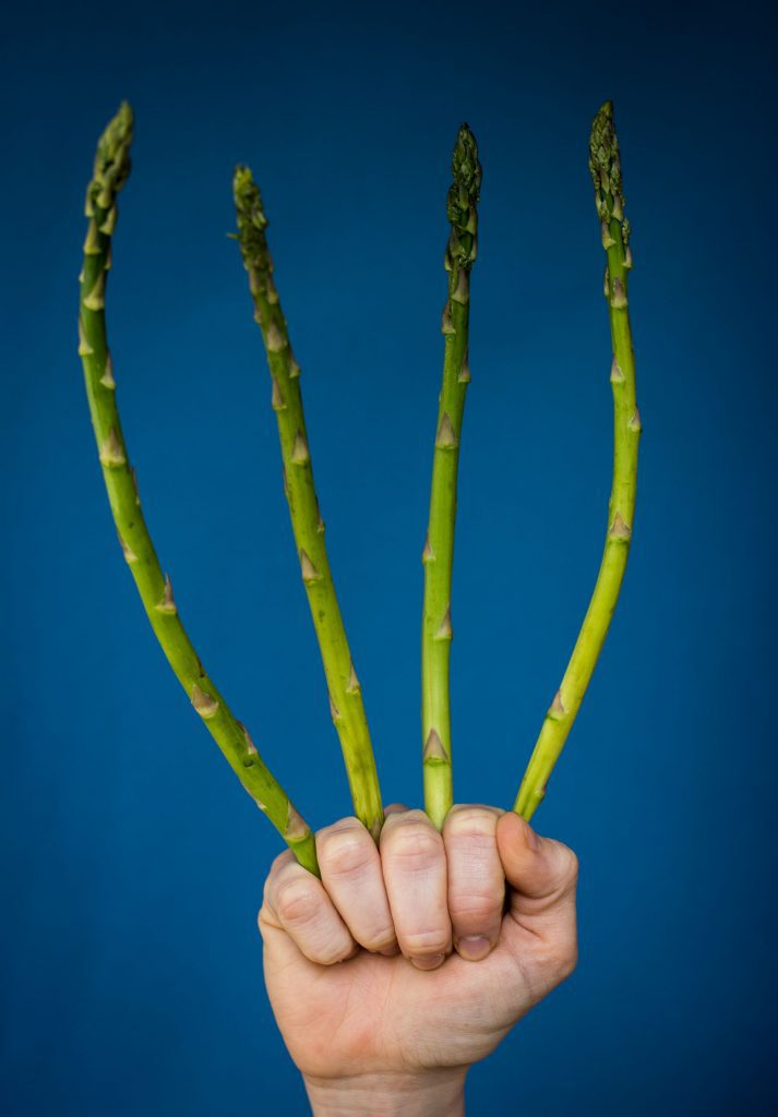 White hand holding spears of asparagus between fingers, which stretch up to the top of the photo. This is in front of a blue background. These are vegan asparagus soup ingredients.